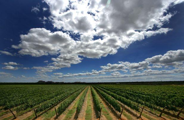 De uma terra inóspita a duas safras anuais de uva
